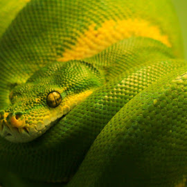 by Shelley Wilson - Animals Reptiles