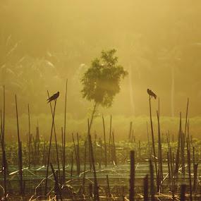 Face to Face by Gokul Rajenan - Animals Birds ( nature, sticks, birds, crows )