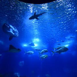 by Darijan Mihajlovic - Animals Fish
