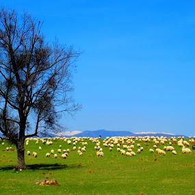 by Bica Razvan - Landscapes Prairies, Meadows & Fields (  )