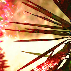 Double exposure by Pixie Simona - Abstract Patterns ( pink flower, bougainvillea, double exposure, yucca, leaves, flower, golden hour,  )