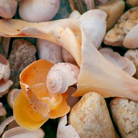 Sea Shell Stones Martha's Vineyard by Robin Amaral - Nature Up Close Rock & Stone ( sea shells, shells, beach stones, nature up close, seaside, stones, natural )