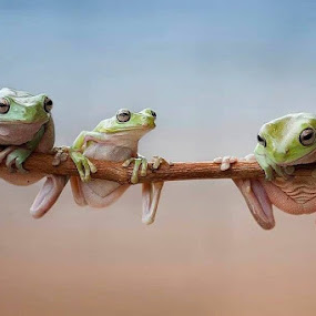 best friend frog by Hendy Mp - Animals Amphibians