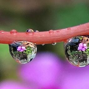 Flower having a Natural Mirror  by Subrata Sarkar - Abstract Water Drops & Splashes ( abstract, nature )