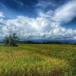 some where in ranah minang by Elvis Hendri - Landscapes Prairies, Meadows & Fields ( clouds, field, indonesia, landscape, natural, photography, country )