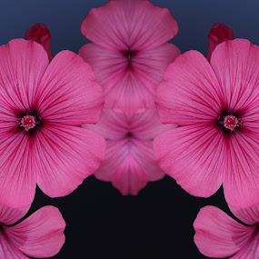 subtle by Paul Griffin - Digital Art Things ( flower )