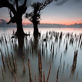 ice picks by Rodrigo Layug - Landscapes Waterscapes ( nature, waterscape, landscape )
