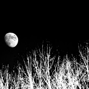by Matthew Lindsey - Digital Art Things ( black and white moon, moon with trees )