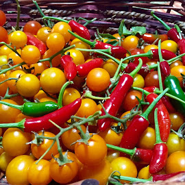 Summer Harvest by Lope Piamonte Jr - Nature Up Close Gardens & Produce ( peppers, red, tomato, colorful, garden )