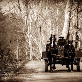 Amish Wagon by Andy Bigelow - Black & White Portraits & People ( #horse, #black&white, #wagon, #scenic, #people, #amish )