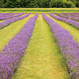by Amy Sauer - Flowers Flower Gardens