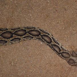 by Venkatesh Ravi - Animals Reptiles