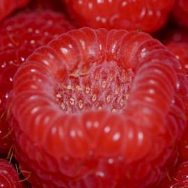 Razzy Berry by Dave Feldkamp - Food & Drink Fruits & Vegetables ( fruit, red fruit, raspberry, fruits, raspberries )