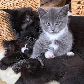Katzenfamilie by Marianne Fischer - Instagram & Mobile iPhone