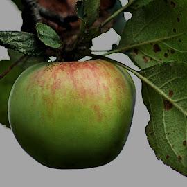 Still on the Tree by Karen Hardman - Food & Drink Fruits & Vegetables