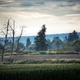 The Pacific Northwest  by Todd Reynolds - Landscapes Prairies, Meadows & Fields