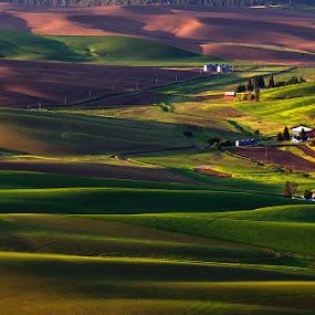 Palouse, Washington by Peter Cheung - Landscapes Mountains & Hills ( washington, palouse )