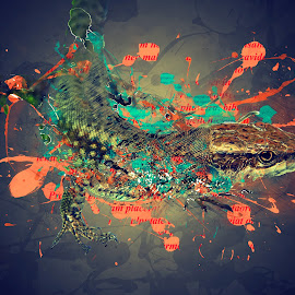 Color splashed Lizard  by Џони Кеш - Digital Art Animals ( countryside, animals, lizard, color splash, animal )