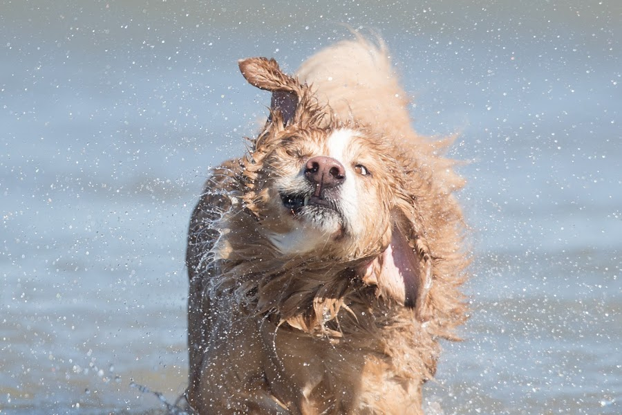 Splash by Peter Marzano - Animals - Dogs Playing