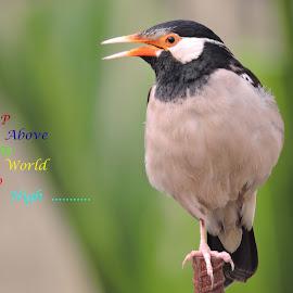 Birdie by SANGEETA MENA  - Typography Quotes & Sentences