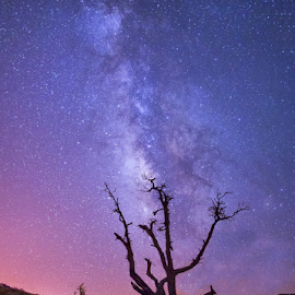 milky way - petra by Hamza Al-amarat - Landscapes Starscapes ( milky way, petra )