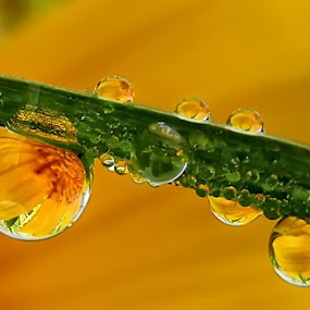 by Lalu Agus Suhardiman - Nature Up Close Water