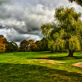 Tee Time by Jason Weagle - Sports & Fitness Golf ( fairway, hdr, path, tee, sports, golf, driver )