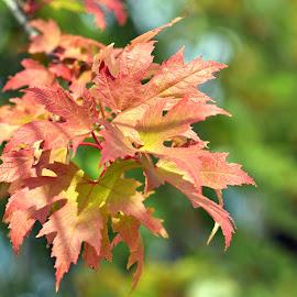 by Biljana Nikolic - Nature Up Close Leaves & Grasses