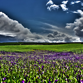 River of flowers by Rui Gonçalves - Landscapes Prairies, Meadows & Fields