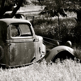 Abandoned Truck by Kathleen Koehlmoos - Transportation Automobiles ( rusty old truck, abandoned truck, northern california, rust, old truck, abandoned pickup )