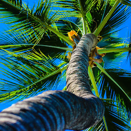 Mighty Palm by Mary Elizabeth McGlynn - Nature Up Close Trees & Bushes