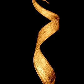 Golden Curl by Devon Andriola - Abstract Macro ( idaho, grass, macro photography, beautiful, nature up close )