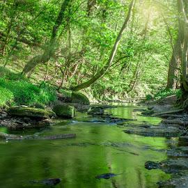Wiosna w Wepre Park :) by Łukasz Rogalski - Nature Up Close Water