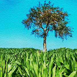 Lone Tree by Richard Michael Lingo - Digital Art Things ( corn field, things, tree, oil painting, digital art )