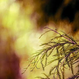 by Toni Mares - Abstract Macro ( colourful, pine tree, branch, bokeh )
