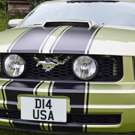 American Muscle by Neil Wilson - Transportation Automobiles (  )