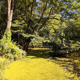 Audubon Pond by Erika  Kiley - Novices Only Landscapes ( pond, trees, summer, duckweed )