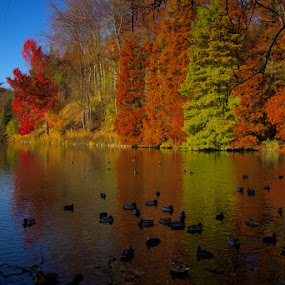 Lake by Javier Luces - Landscapes Forests ( sky, nature, autumn, colors, fall, ducks, trees, lake, woods )