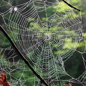 come into my web by Elizabeth Sztejner Skillings - Nature Up Close Webs