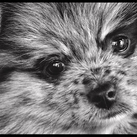 by Donna Green - Animals - Dogs Puppies (  )