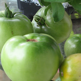 Green Tomatoes by Rebecca Oyer - Food & Drink Fruits & Vegetables (  )
