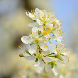 Plum Tree Blossom by Teresa Menard - Novices Only Flowers & Plants