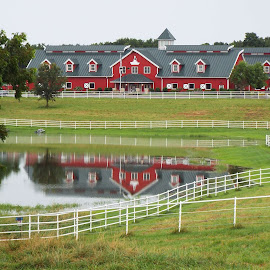 Warm Springs Ranch by Dale Moore - Buildings & Architecture Other Exteriors ( ponds, fence, reflection, missouri, beer, horses, waterscape, horse, reflections, fences, pond )