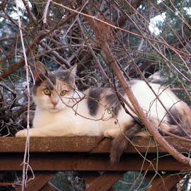 by Linda Woodworth Sulla - Animals - Cats Portraits