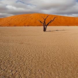 by Francois Loubser - Landscapes Deserts