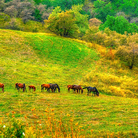 Horses by Vladimir Gergel - Animals Horses