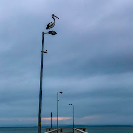 moody morning  by Taz Graham - Novices Only Landscapes ( clouds, ocean, pelican, skies )