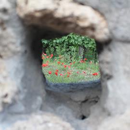 by Raghav Patel - Nature Up Close Gardens & Produce
