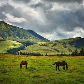 Three Chestnut Horses by Matej Kováč - Landscapes Mountains & Hills ( hill, clound, mountain, horse, landscape, alps )
