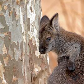 by Kishu Keshu - Animals Other Mammals